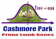 Cashmore Park